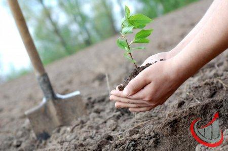Посадить дерево - цель №25 выполнена